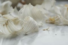 Garlic on the table Royalty Free Stock Photos