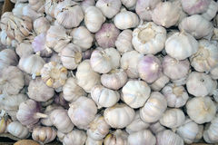 Garlic Texture Stock Image