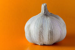 Garlic and tomatoes on a white background stock image