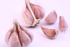 Garlic vegetable close up. Isolated on white background Stock Image
