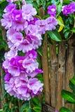 Garlic Vine Flower Stock Image