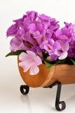 Garlic vine, flowers. Stock Photo