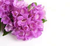 Garlic vine, flowers. Royalty Free Stock Photo