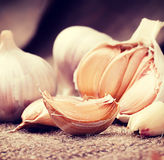 Garlic. Vintage retro hipster style version Royalty Free Stock Images