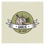 Garlic Vintage set of labels, emblems or logo for vegeterian food, vegetables hand drawn or engraved. Retro farm. American style Stock Photo