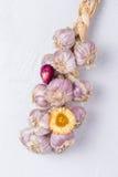 Garlic on wall. Bunch of garlic drying on wall Royalty Free Stock Image