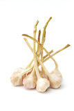 Garlic on white background Stock Photography