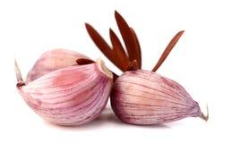 Garlic on a white background royalty free stock photos