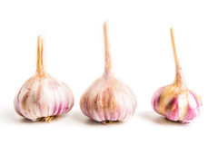 Garlic  on white background. Head of garlic  on white background with shadow Stock Image