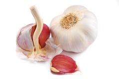 Garlic  on white Royalty Free Stock Photos