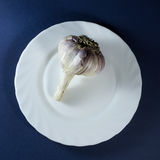 Garlic in white plate. On dark blue background stock photos