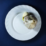 Garlic in white plate. On dark blue background royalty free stock images