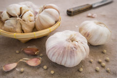Garlic whole and cloves Royalty Free Stock Image