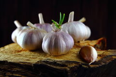 Garlic whole with the sprout and a clove of garlic Royalty Free Stock Image