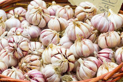 Garlic. In a wicker basket at the market royalty free stock image