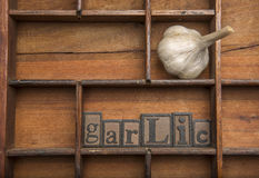 Garlic wood typeset and a garlic clove Royalty Free Stock Photography