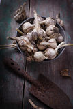 Garlic on wooden background. Royalty Free Stock Image