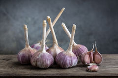 Garlic. On a wooden board Stock Images