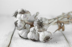 Garlic  on wooden table. Stock Image