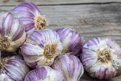 Garlic on wooden vintage background. stock photos