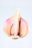Garlick bulb Royalty Free Stock Image