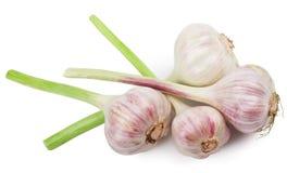 Garlics изолировало стоковое изображение rf