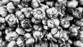 garlics Imagen de archivo
