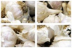 Garlics stockfoto
