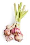 garlics Royaltyfri Bild