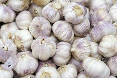 Garlics. The background of many garlics Royalty Free Stock Images