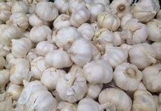 garlics Fotografia Stock