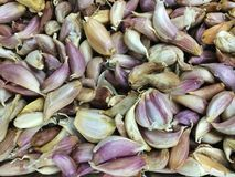 garlics Foto de Stock Royalty Free