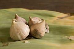 garlics fyra Royaltyfria Bilder