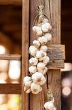 Garlics hanging Stock Photography