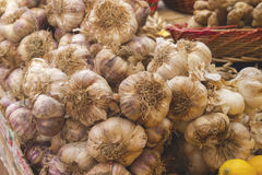 Garlics Royalty Free Stock Image