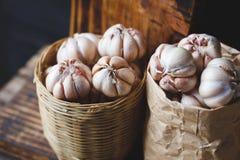 Garlics Royalty Free Stock Photos