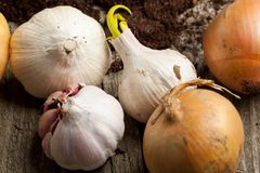 Garlics and onions Royalty Free Stock Images