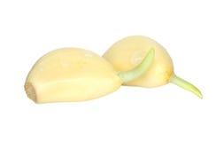 Garlics på vit Arkivfoton
