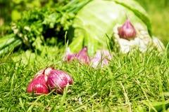 Garlinc cor-de-rosa Imagem de Stock