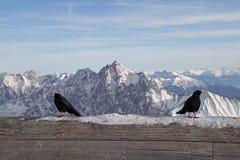 Garmisch preto Alemanha da paisagem do céu azul do inverno do esqui da neve da montanha dos cumes do zugspitze do pássaro Imagens de Stock