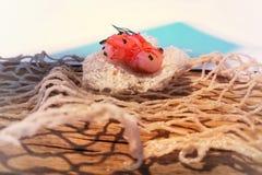 Garnaal met de schil en de grapefruit van het porvarkensvlees royalty-vrije stock afbeeldingen