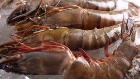 Garnalen en zeeschelpen stock footage