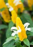 Garnalen Flower3 Royalty-vrije Stock Afbeeldingen