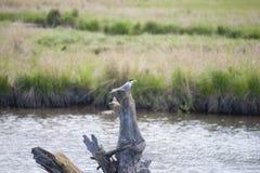 Garncarki bagna rezerwata dzikiej przyrody zakotwienie Alaska Zdjęcie Royalty Free