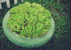 Garnek rośliny Zdjęcie Stock