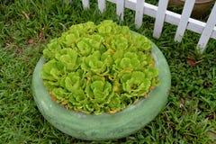 Garnek rośliny Zdjęcia Stock