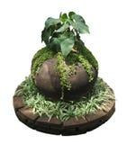 Garnek roślina Obraz Stock