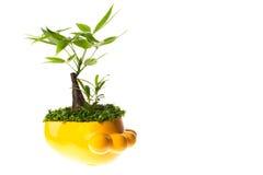 Garnek roślina Fotografia Stock