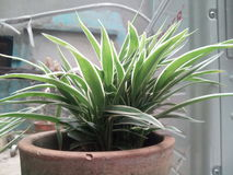 Garnek roślina Zdjęcie Stock