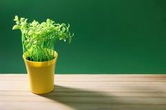 Garnek roślina Zdjęcia Royalty Free